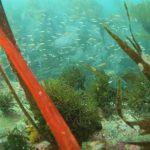 Fotografía de Vida Submarina